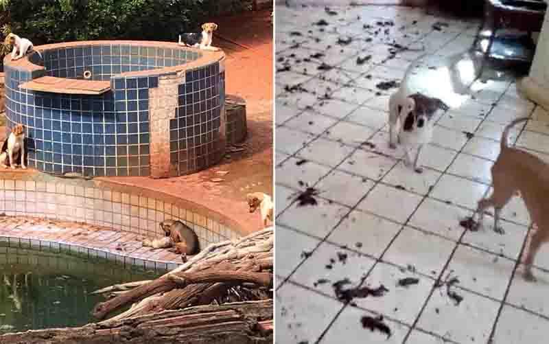 Casa onde cães estavam na zona Sul de Ribeirão Preto, SP, é achada lotada de fezes. Foto: Daniela Bertalo Azevedo