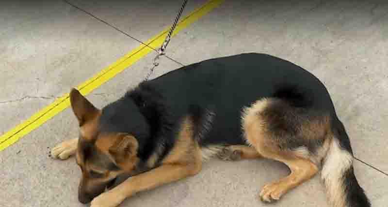 Autor de maus-tratos a animais terá que pagar tratamento em Ribeirão Preto, SP