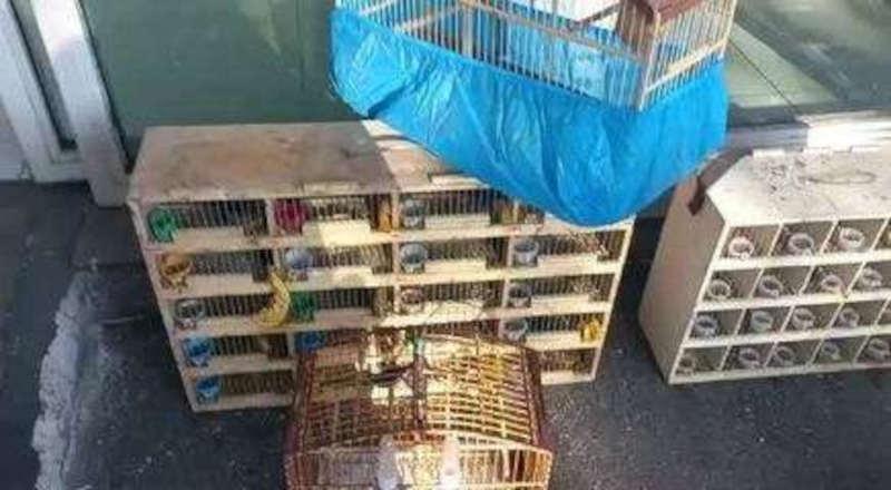 Três homens são presos por transportar mais de 300 animais silvestres em caminhão na Zona Norte de SP