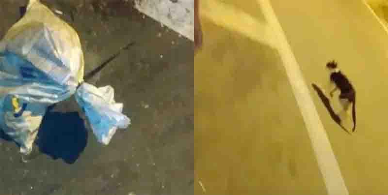 Gato é encontrado por moradores amarrado dentro de saco em SP