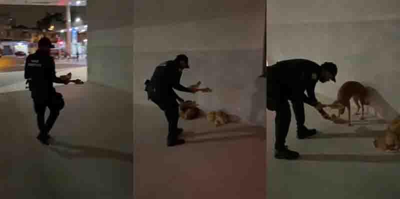 Vídeo comovente mostra guarda alimentando cachorros com frio e fome em Santos, SP