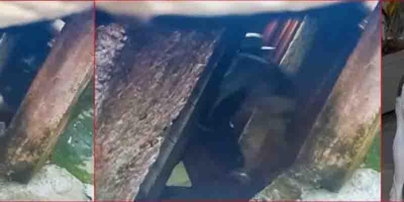 Polícia Civil de São Bernardo do Campo (SP) prende homem que aparece em vídeo chutando e jogando cão ao chão
