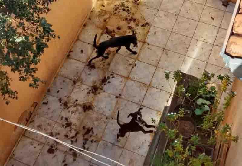 Justiça concede liberdade provisória a professor preso por maus-tratos a animais em Rio Preto, SP