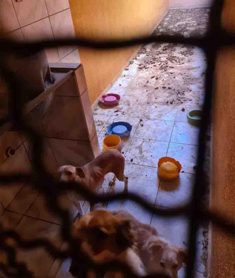 Cachorros estavam magros e sem comida há dias em Rio Preto. Foto: Arquivo Pessoal