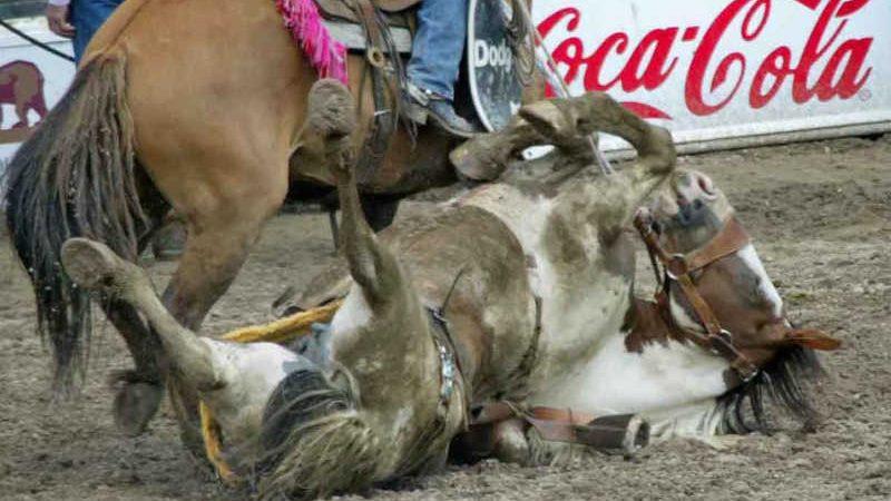 Placar Animal - Rodeios em Sorocaba NÃO!