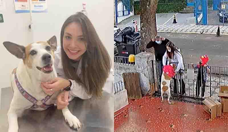 Veterinária que deu roupa nova para cadela roubada no portão de casa diz que ficou comovida: 'Gosto muito dela'
