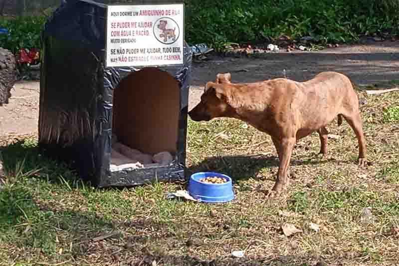 ONG Patre distribui dezenas de abrigos para animais de rua em Taboão da Serra e região, SP