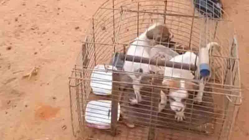 Filhotes estavam presos dentro de uma gaiola de passarinho. Foto: Reprodução/Instagram da 3ª CIPM