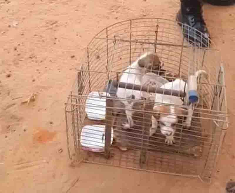 Filhotes de cachorro são encontrados presos em gaiola de passarinhos após denúncia de maus-tratos