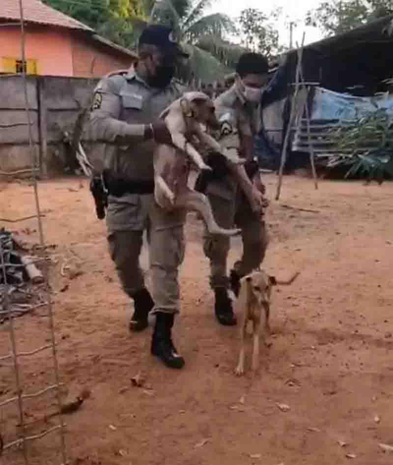 Cães adultos também foram resgatados no local. Foto: Reprodução/Instagram da 3ª CIPM