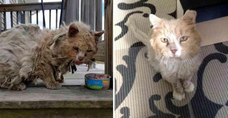 Gata abandonada é acolhida por família amorosa e passa por incrível transformação