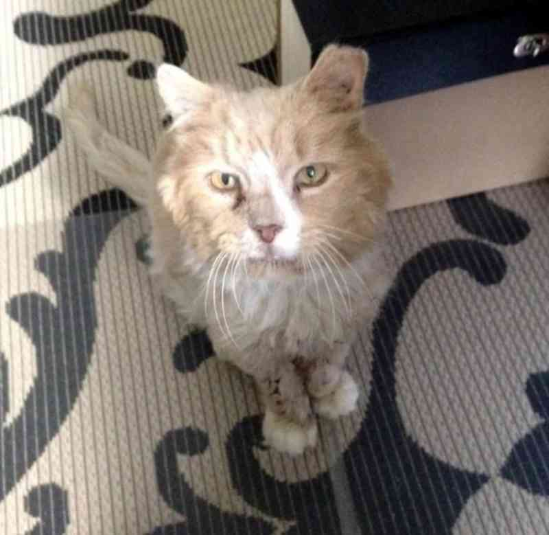 Fotos: Merrimack River Feline Rescue Society