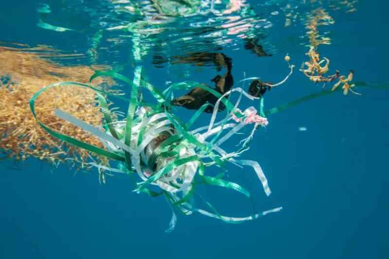 Lixo plástico no Mar de Sargaços, no Atlântico Norte. A semelhança entre certos itens, que levam séculos para se desfazerem, e potenciais fontes de alimentos de animais é evidente. FOTO DEDAVID DOUBILET