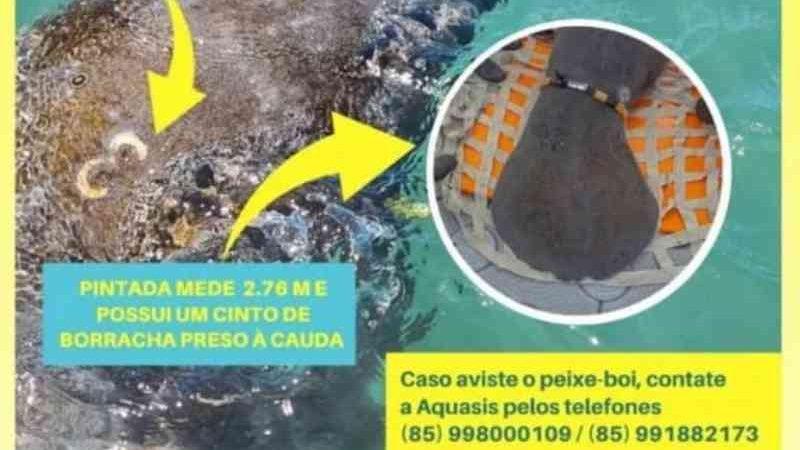 Alerta emitido pela ONG Tartarugas do Delta. FOTO: Reprodução