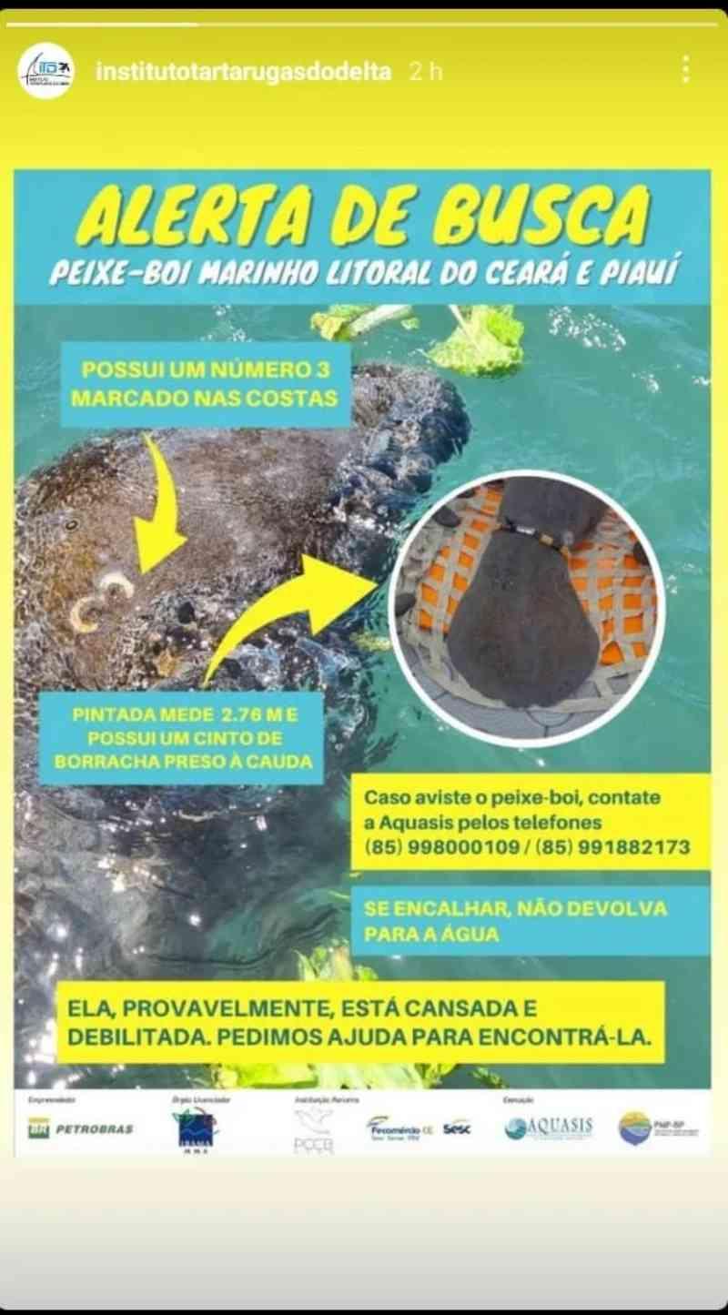 ONGs procuram peixe-boi-marinho que estaria perdido entre Ceará e Piauí