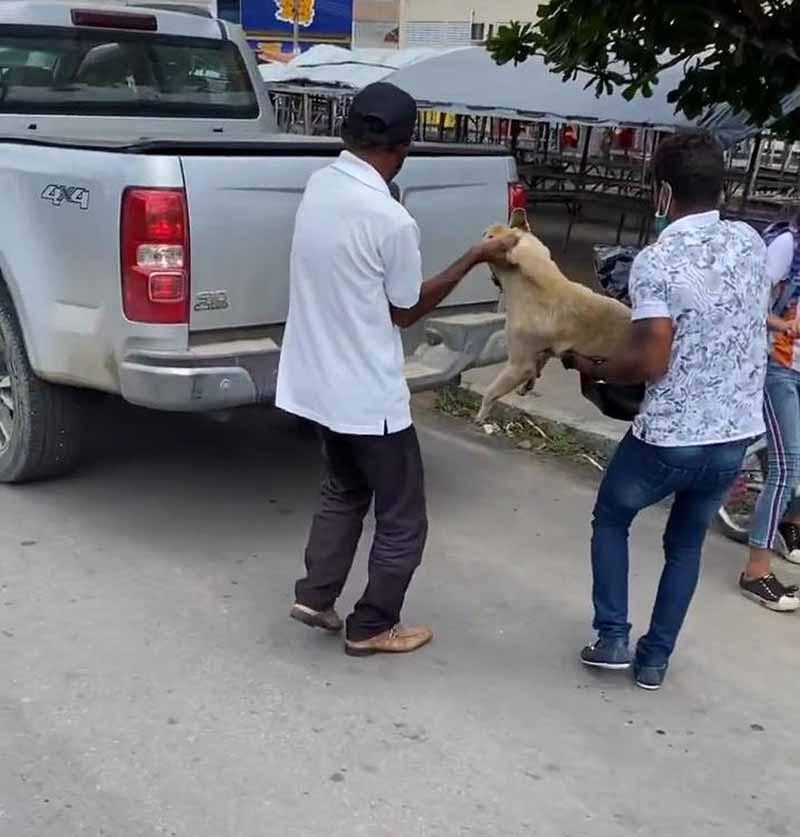 Feirante é preso suspeito de esfaquear e matar cadela em Delmiro Gouveia, AL