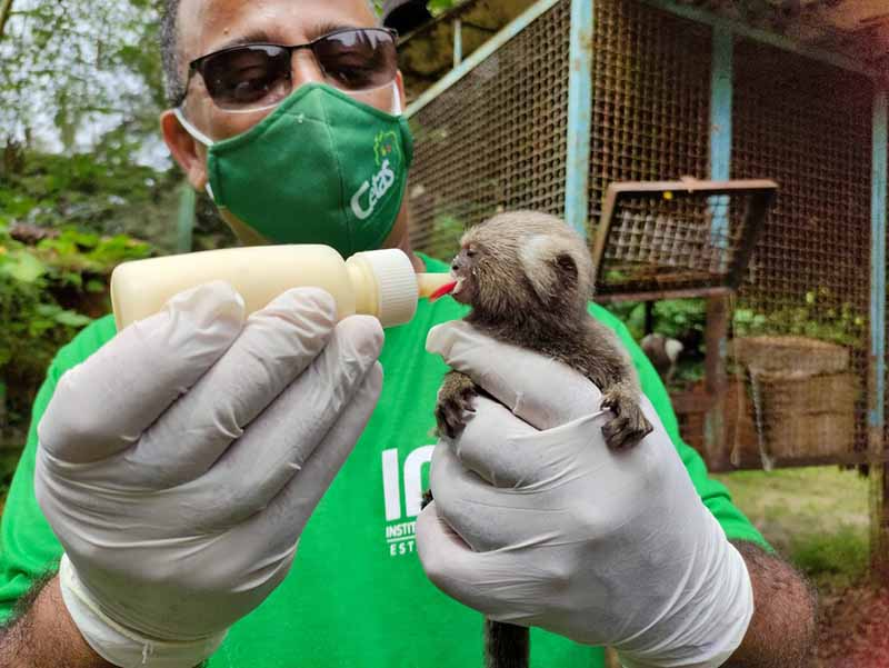 Cerca de 500 animais são atendidos mensalmente pelo Cetas; alguns deles são filhotes — Foto: Assessoria/IMA