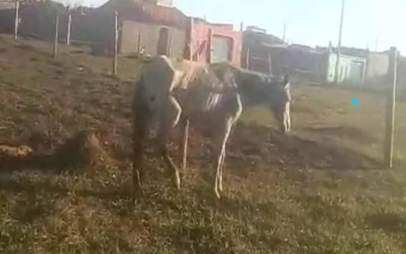 Indignação: moradora denuncia maus-tratos de cavalo em Barra do Choça, BA