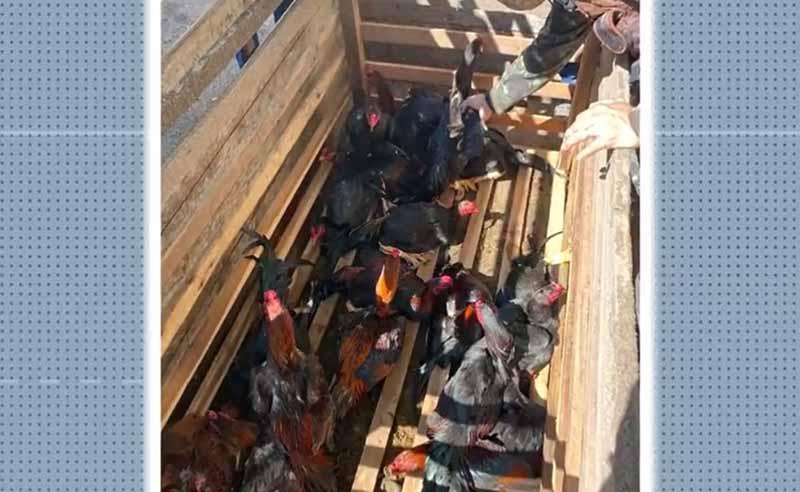 Mais de 120 aves em situação de maus-tratos são apreendidas em sítio no sul da Bahia