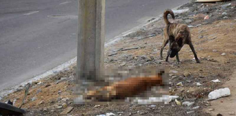 Cadela e seis filhotes são mortos por envenenamento em Vitória da Conquista, BA