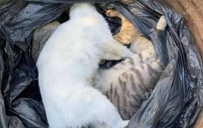 Ceará: protetores denunciam onda de violência contra animais no Cariri