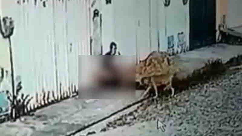 Câmera de segurança flagra homem praticando zoofilia com um cão em Maracanaú. Foto: Reprodução