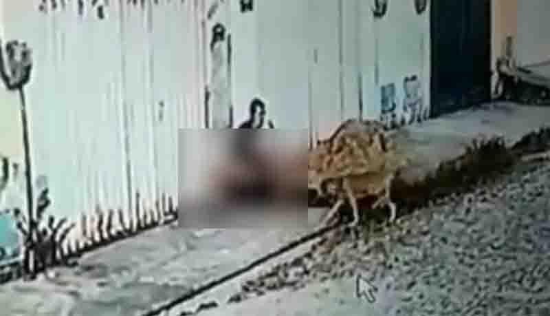 Caso de zoofilia em Maracanaú, na Grande Fortaleza, é investigado pela polícia; vídeo