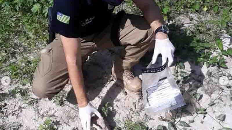 Polícia apreende e solicita perícia de ossadas de cães após denúncia de eletrocussão em Barras. Foto: Divulgação/PCPI