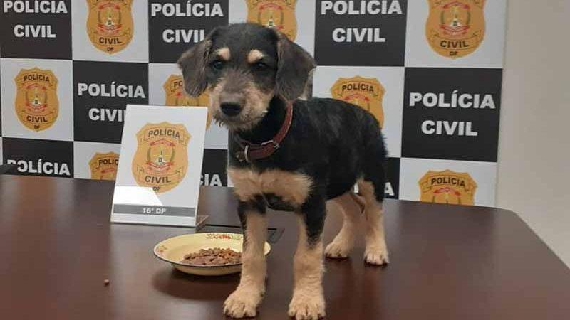 Cadela Safira, resgatada após tutor ser preso por maus-tratos, no DF. Foto: PCDF/Divulgação