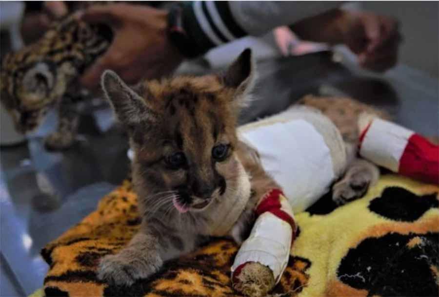 STF adia novamente julgamento sobre abate de animais apreendidos