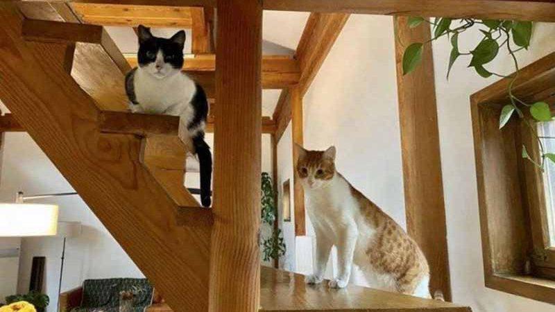 Os gatinhos Alicia (E) e Chicó acompanharam a tutora, Talita Fernandes, na mudança para a China. (foto: Arquivo Pessoal)
