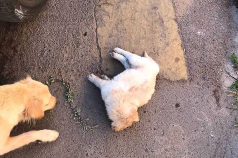 Vídeo: homem bate em irmã e deixa filhote de cachorro agonizando após chute