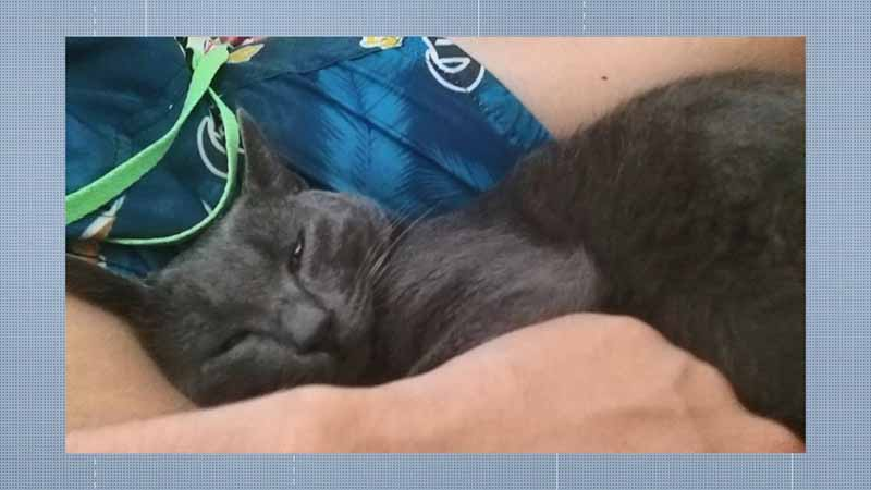 Matias, gatinho morto envenenado em Linhares — Foto: Reprodução/TV Gazeta