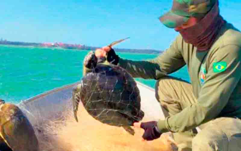 Tartarugas-marinhas são encontradas mortas em rede de pesca no ES