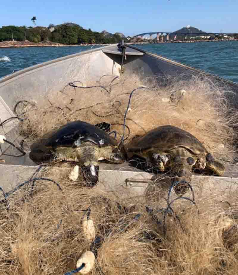 Tartarugas presas em rede de pesca. Foto: Reprodução