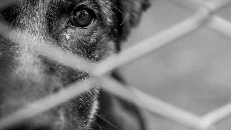 Animais são mantidos em local sem higiene