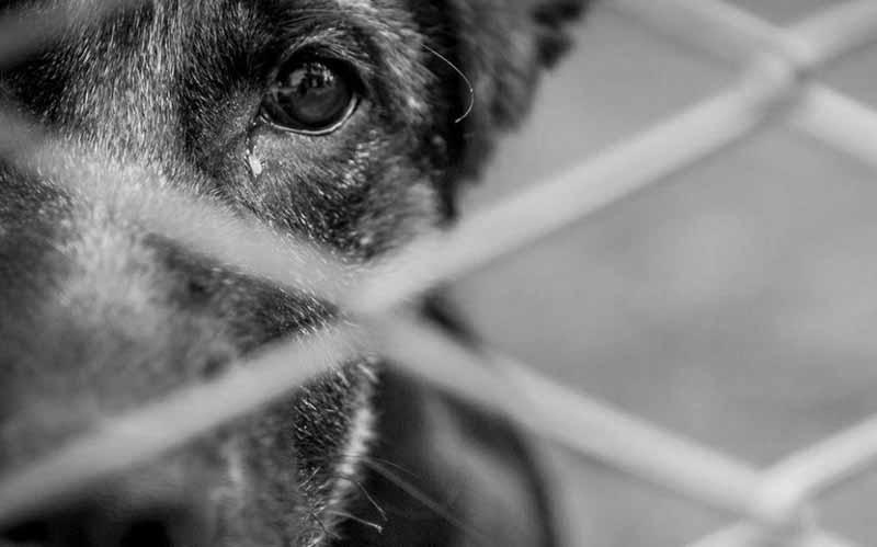 Brasileiros denunciam suposto criador de cachorros por maus-tratos em Lawrence, nos EUA