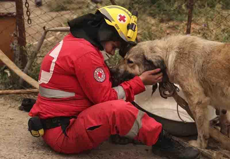 Abrigo provisório trata animais após incêndios florestais na Grécia