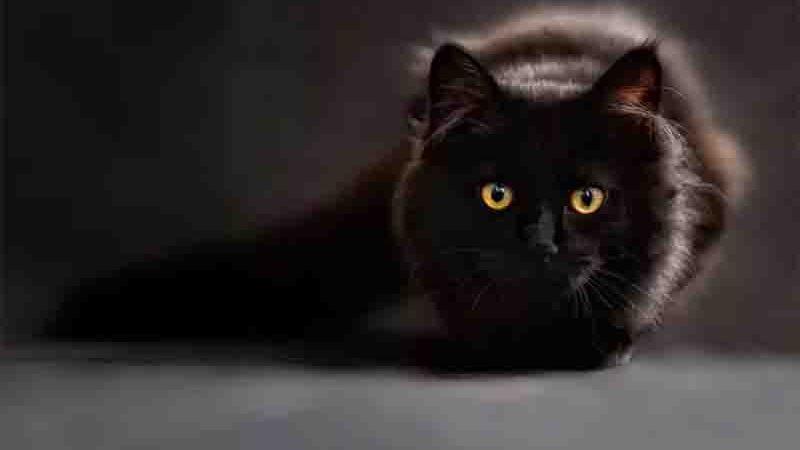 Inglaterra investiga marcas de ração após centenas de gatos doentes e 355 mortos