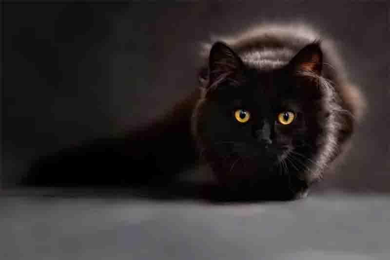 Inglaterra investiga fabricante de ração após a morte de pelo menos 355 gatos