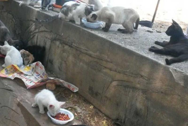 Instalação de câmeras na 'Praça dos Gatos', em São Luís (MA), dá resultados contra o abandono