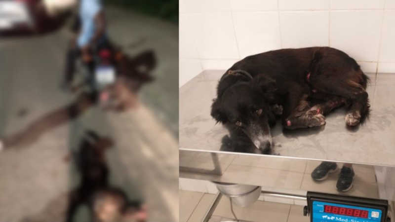 Homem é preso após arrastar cachorro amarrado em moto no MA