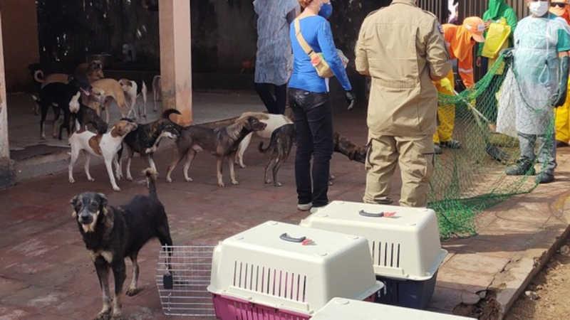 Cães são retirados de casa de idosa em São Luís; local abriga cerca de 100 animais — Foto: Divulgação/MP-MA