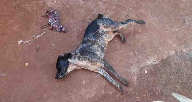 Cães são envenenados e mortos no Nadime Derzi, em Ituiutaba, MG