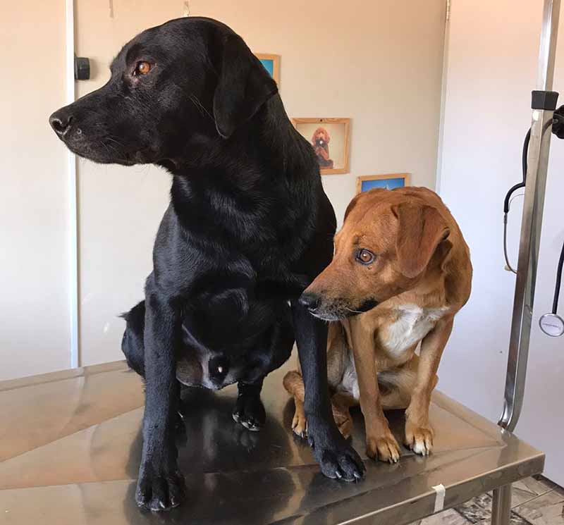 Cachorros têm testículos arrancados em Vespasiano, na Região Metropolitana de BH