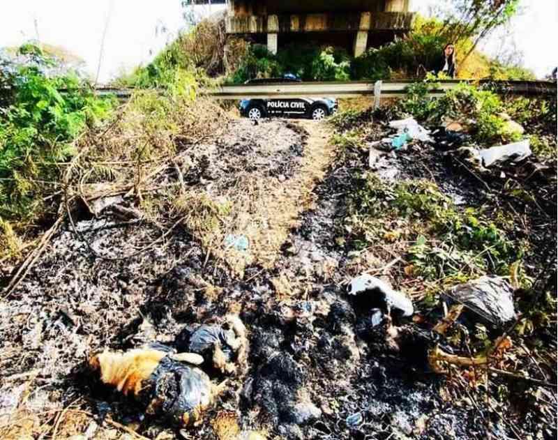 Doze animais são encontrados mortos em Lagoa Santa, MG; polícia investiga