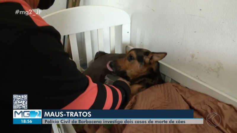 Polícia Civil conclui inquérito sobre maus-tratos a animais e indicia homem em Barbacena, MG