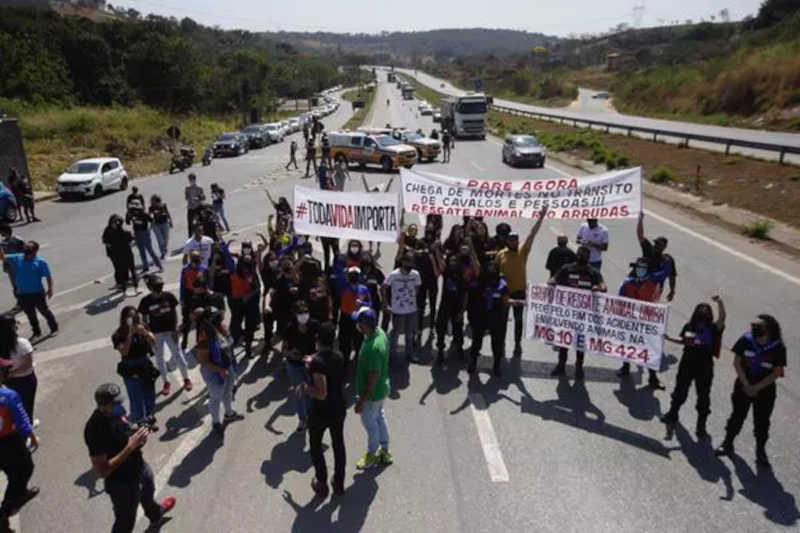 Grupo protesta em BH pelo fim dos acidentes com animais na MG-010 e na MG-424