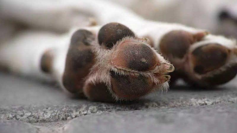 Cachorro foi encaminhado para abrigo   foto meramente ilustrativa. Pixabay/reprodução