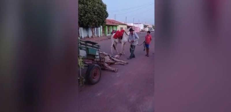 Carroceiro suspeito de bater em cavalo após animal cair na estrada por excesso de peso na carroça é preso em MT